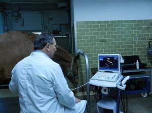 Ultraschalldiagnostik und Ultraschalluntersuchung von Tierarzt Dr. Hebeler in Türkheim