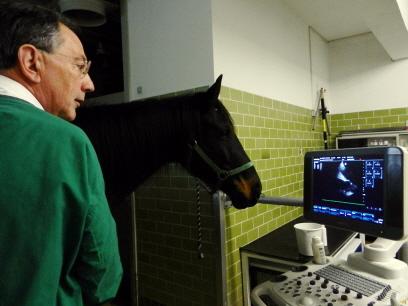 Kardiologie - Untersuchung auf Herz-Kreislauf-Erkrankungen - Tierarzt Dr. Hebeler Türkheim